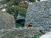 サンゴの石垣(阿伝集落)・写真