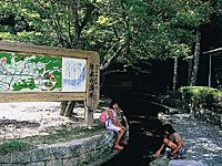 清水の湧水・写真