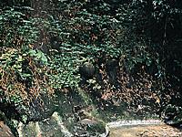 大興寺の子生れ石・写真
