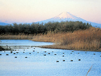 大井川河口野鳥園・写真