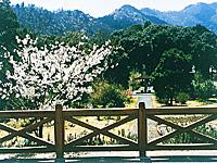 中山薬草薬樹公園