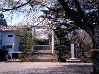 樋の山公園の桜