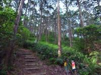 山と尾鷲ひのき博物館・写真