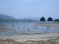 向井黒の浜海岸 潮干狩り・写真