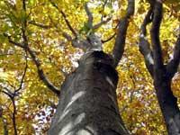 生杉ブナ原生林