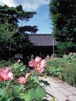 舎那院のフヨウ・写真