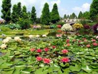 草津市立水生植物公園みずの森・写真