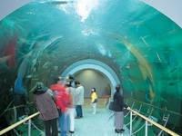 滋賀県立琵琶湖博物館・写真