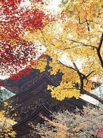 西明寺(湖東三山)・写真