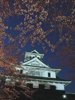 豊公園の桜・写真