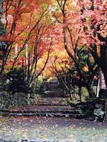 鶏足寺・写真