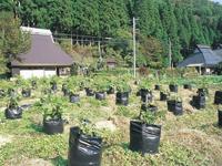 体験・山菜摘み農園じゅうべえ・写真