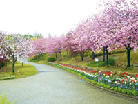 宇治市植物公園・写真