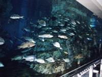 関西電力 宮津エネルギー研究所「丹後魚っ知館」・写真