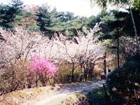 鴻ノ巣山・写真