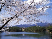 三段池公園の桜・写真