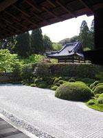 一休寺の萩・写真