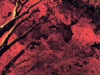笠置山の紅葉・写真