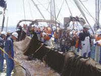 養老漁業(体験)・写真