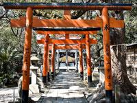 信太森葛葉稲荷神社・写真