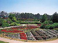 浜寺公園「ばら庭園」・写真