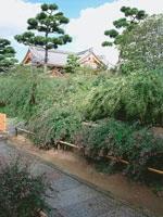 萩の寺(東光院)のハギ・写真