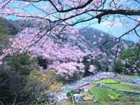 摂津峡公園・写真
