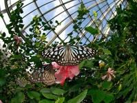 伊丹市昆虫館・写真