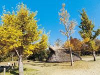 播磨大中古代の村・写真