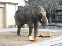 姫路市立動物園・写真