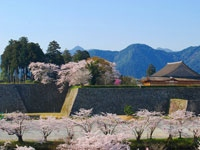 篠山城大書院の桜・写真