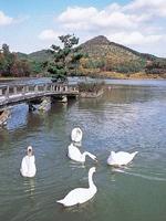 兵庫県立有馬富士公園菖蒲園・写真
