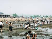 的形海水浴・潮干狩 観光協業組合・写真