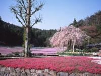 花のじゅうたん・写真