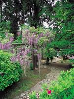 春日大社神苑萬葉植物園