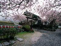 高天寺 橋本院・写真