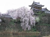 郡山城跡の桜(大和郡山お城まつり)・写真