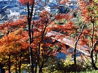 竜田川(県立竜田公園)・写真