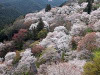 吉野山観光協会・写真