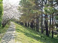 広村堤防・写真