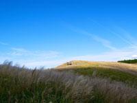 生石高原のススキ・写真