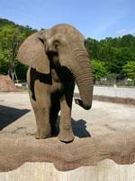 盛岡市動物公園・写真