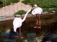 和歌山公園動物園・写真