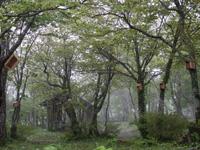 稲庭岳キャンプ場・写真
