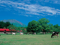 小岩井農場・写真