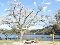 鵜の池キャンプ場・写真
