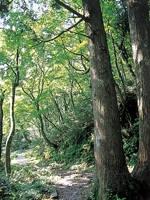 大山ぶなの森ウォーク・写真
