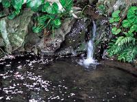 天川の水・写真