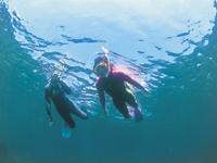 隠岐の国ダイビング・写真