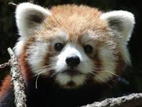 池田動物園・写真